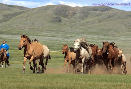 Mongolian horses & horseman