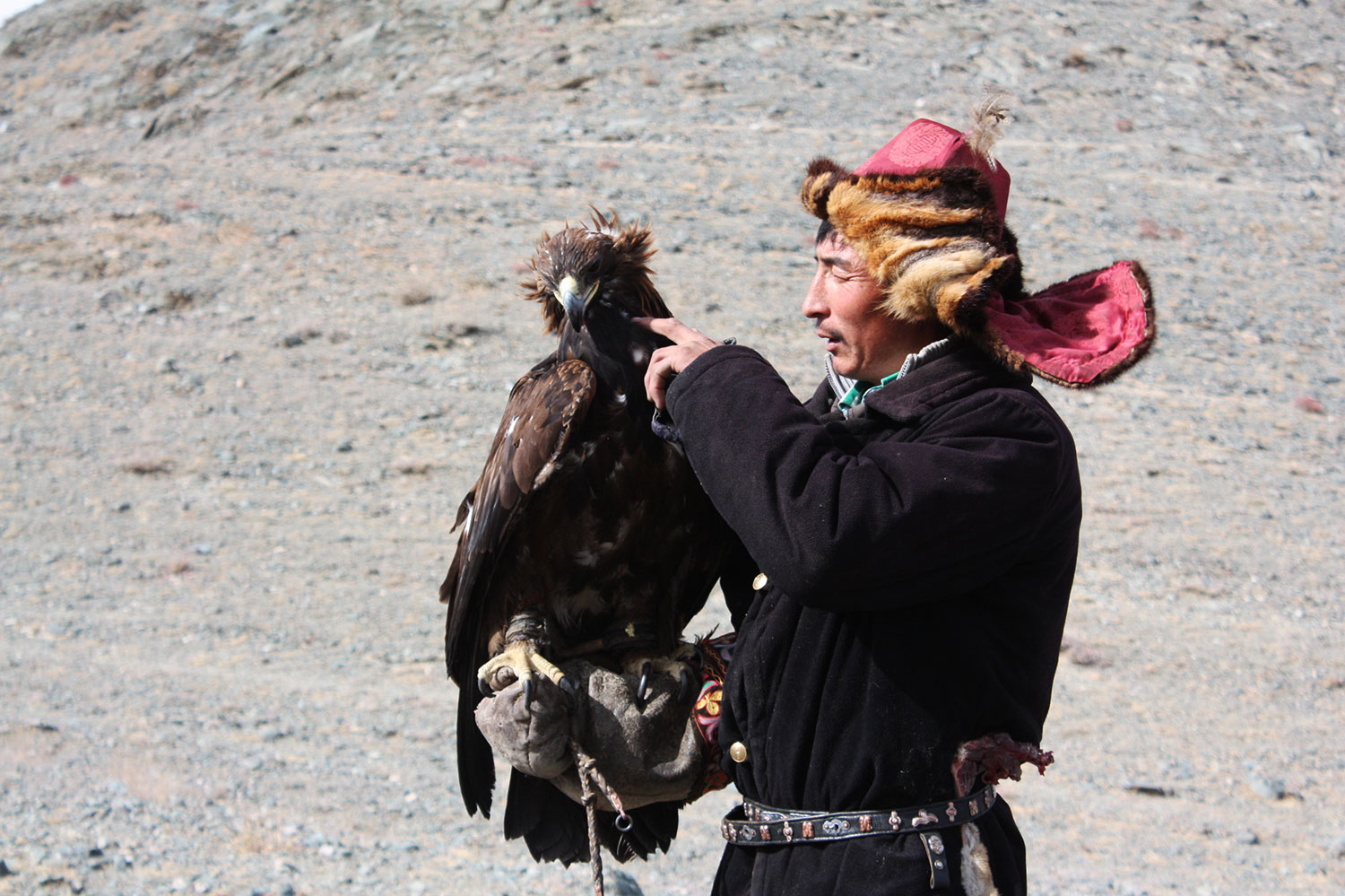 mongolia kazakh eagle hunter
