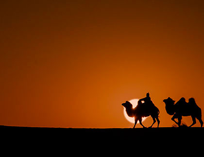 two camels with sun ball in gobi desert