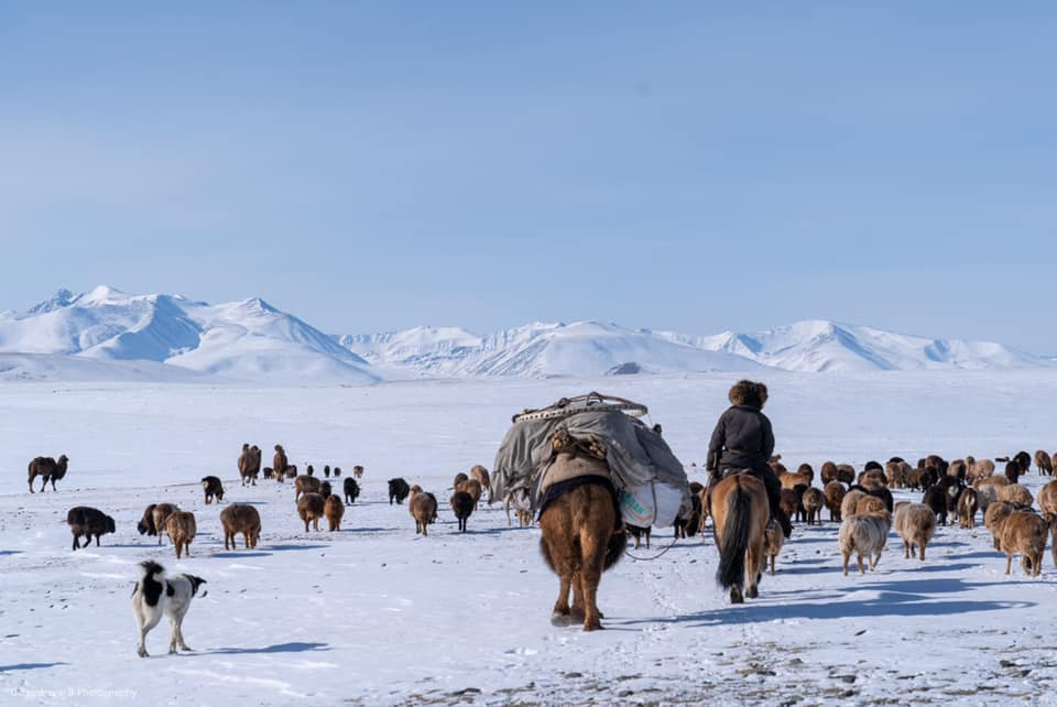 Mongolian spring migration, Mongolian nomads, travel to Mongolia